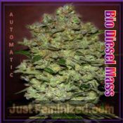 Bio Diesel Mass Advanced Seeds auto-flowering UK Supplier